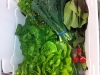 sharebox-greens-2
